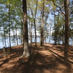 Piney forest by Lake Claiborne in north Louisiana